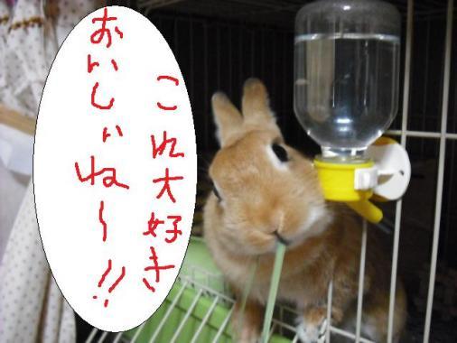 004_20110819100051.jpg