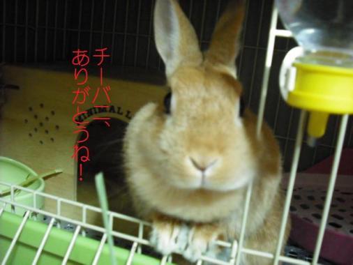 004_20110912094432.jpg