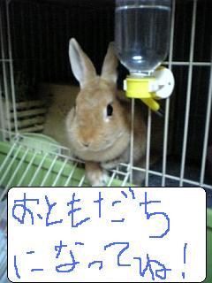 071_20110704094415.jpg