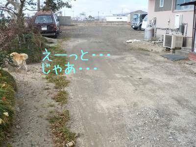 ご飯>散歩4