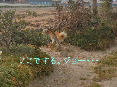 ご飯>散歩5