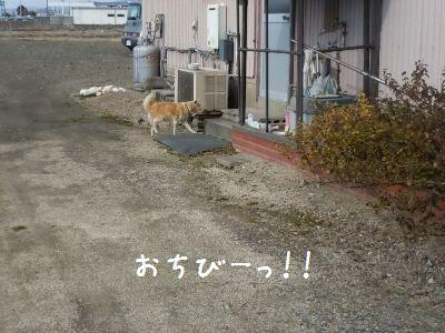 ご飯>散歩3