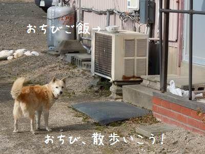 ご飯>散歩1