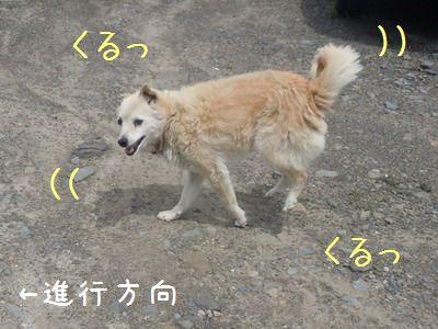 DSCN0956.jpg