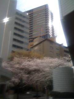 20110404_intercitysakura.jpg
