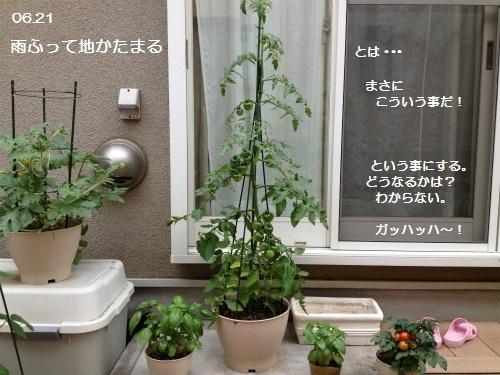 13IMG_3343.jpg