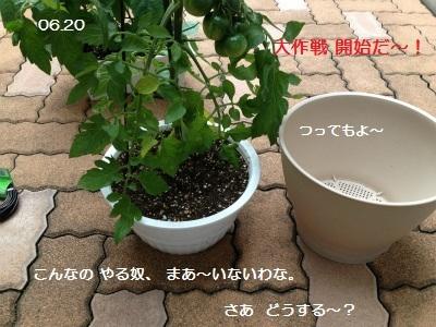 1IMG_3235.jpg