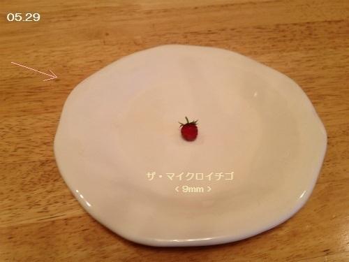 IMG_2303 イチゴ