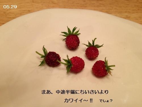 0529 イチゴ