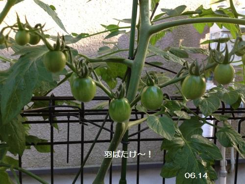 0614-4 トマト 1