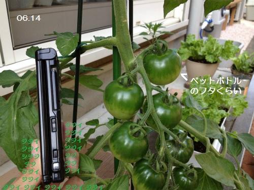 0614-5 トマト 2