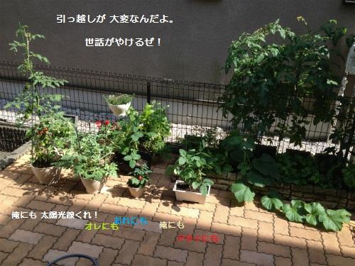 2 IMG_3553