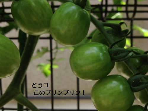 7  IMG_3627