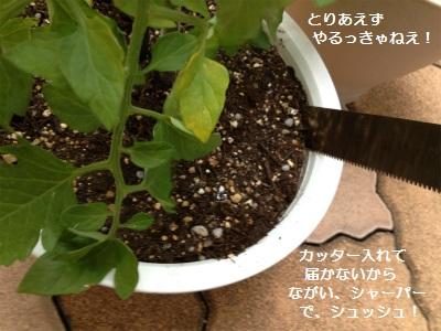 2IMG_3242.jpg
