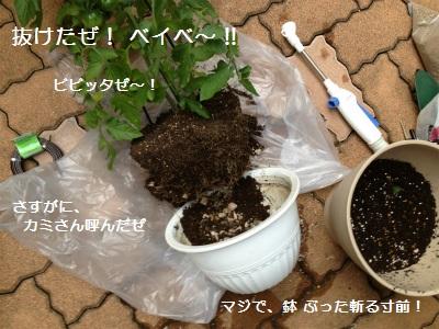 6IMG_3251.jpg
