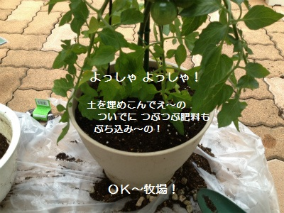 8IMG_3265.jpg