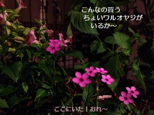 IMG_6443.jpg