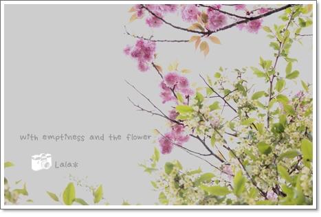 八重桜と・・