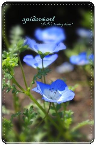 青い花・・・
