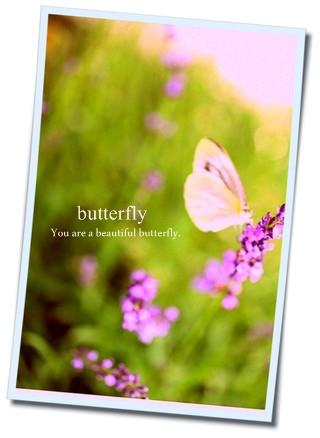 蝶ラベンダー