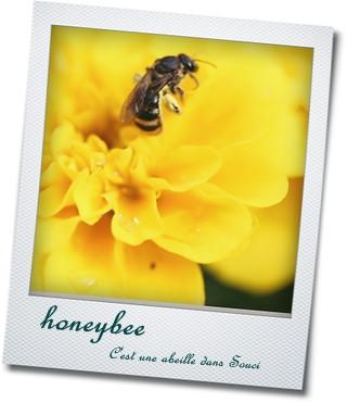 ミツバチ画像♪