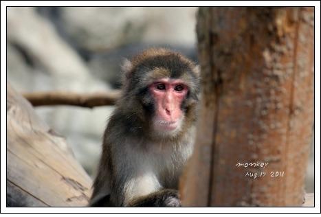 旭山動物園 猿さん
