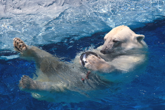 ピース、プール遊び