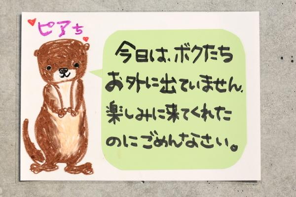 とべ動物園を応援する写真クラブのブログ-とべ動物園にてカワウソの赤ちゃん誕生です。