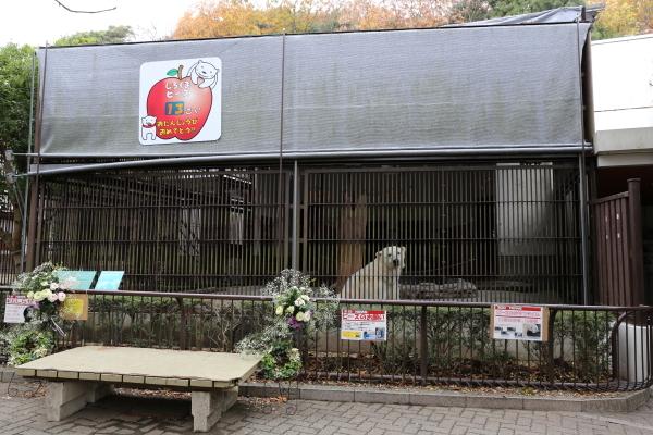 とべ動物園を応援する写真クラブのブログ-しろくまピース13歳お誕生日から3日後