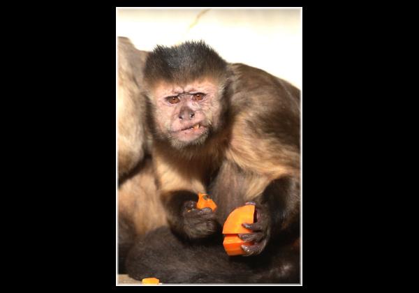 とべ動物園を応援する写真クラブのブログ-お食事中、すみません。