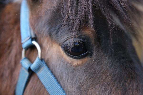 とべ動物園を応援する写真クラブのブログ-お馬さんの瞳へ大接近
