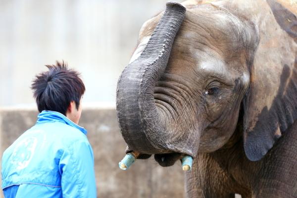 とべ動物園を応援する写真クラブのブログ-正面からゾウさんと向き合う