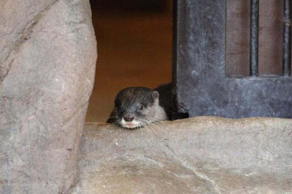 とべ動物園を応援する写真クラブのブログ-久しぶりに「こんにちは」