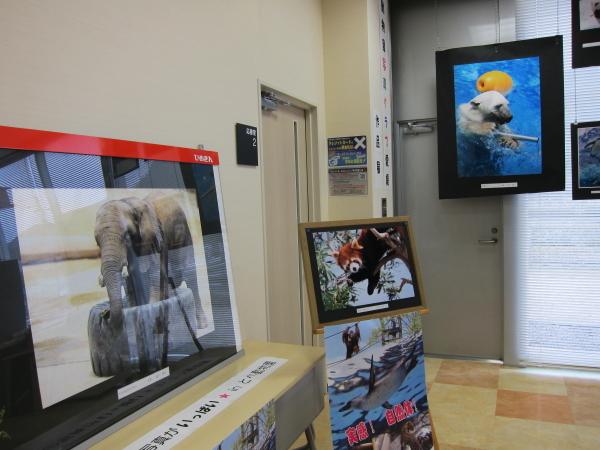 とべ動物園を応援する写真クラブのブログ-愛媛銀行さんにてとべ動物園写真クラブの写真展
