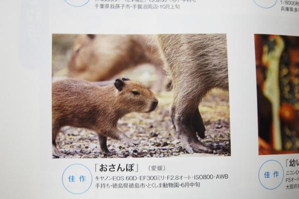 とべ動物園を応援する写真クラブのブログ-写真クラブ会員のなかやんさんが佳作を受賞