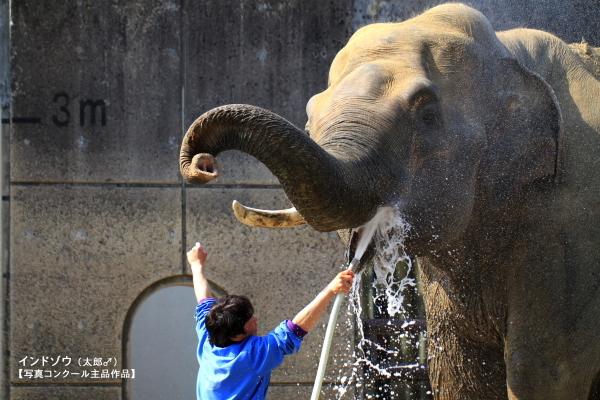 とべ動物園を応援する写真クラブのブログ-とべ動物園オリジナルカレンダーの1月