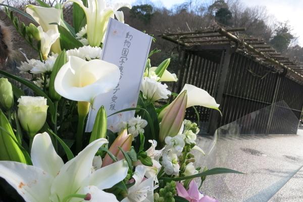 とべ動物園を応援する写真クラブのブログ-とべ動物園インドゾウの太郎くんありがとう