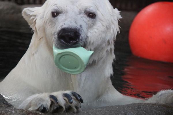 とべ動物園を応援する写真クラブのブログ-なお@華ママさん撮影「はむはむ…」