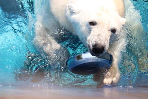 とべ動物園を応援する写真クラブのブログ-なお@華ママさん撮影「見て~!」
