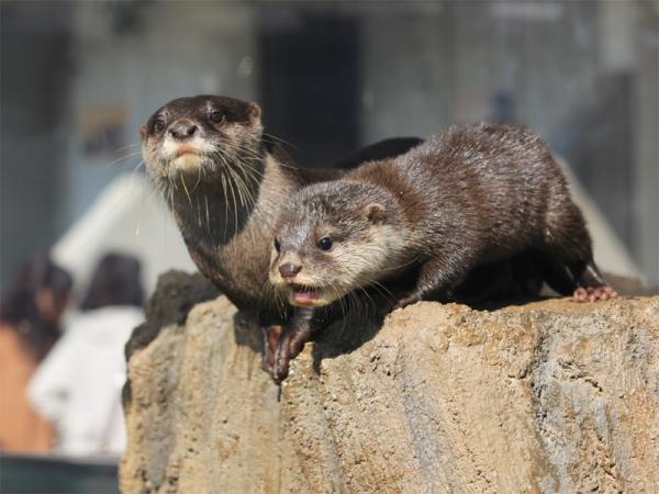 とべ動物園を応援する写真クラブのブログ-ぼ~ちゃんさん撮影「ご飯ちょ~だい!!」