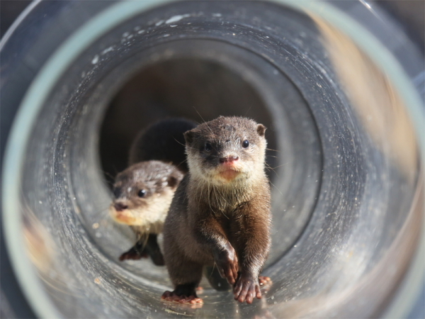 とべ動物園を応援する写真クラブのブログ-パイプの中もへっちゃらだ~い!