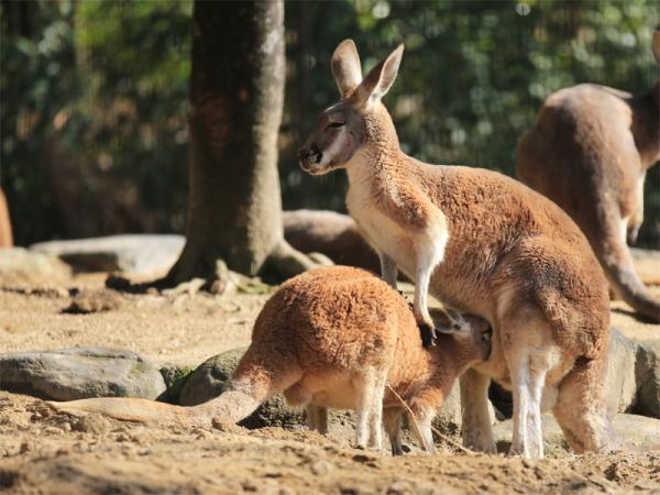 とべ動物園を応援する写真クラブのブログ-ぼ~ちゃんさん撮影「中に入りたい・・・」