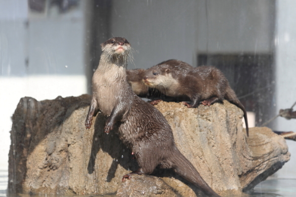とべ動物園を応援する写真クラブのブログ-白鯨さん撮影「エサ まだ!」