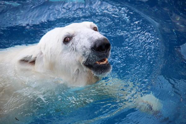 とべ動物園を応援する写真クラブのブログ-なお@華ママさん撮影『ドヤ顔』!?