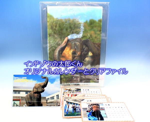 とべ動物園を応援する写真クラブのブログ-インドゾウ太郎くんのカレンダーとクリアファイル