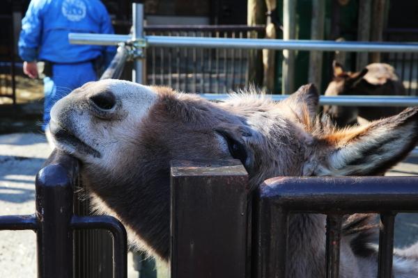 とべ動物園を応援する写真クラブのブログ-まったり~お気に入りの柵にもたれる姿がかわいい