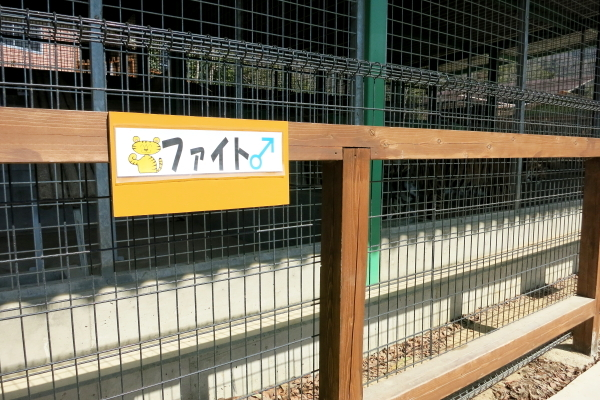 とべ動物園を応援する写真クラブのブログ-しろとり動物園ホワイトタイガーファイト君