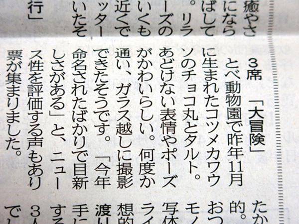 とべ動物園を応援する写真クラブのブログ-愛媛新聞「読者の写真」のコーナーにて3席受賞