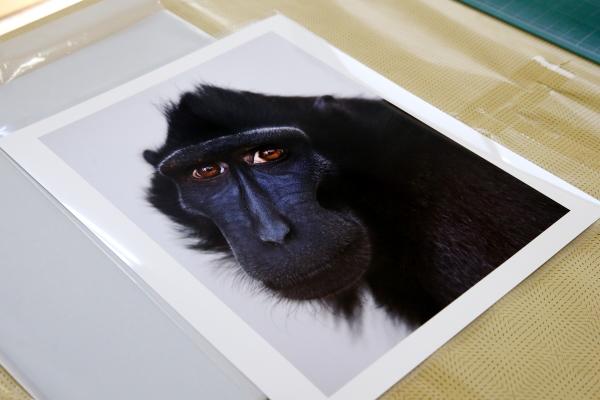とべ動物園を応援する写真クラブのブログ-日本写真家協会の写真コンテストに「入選」
