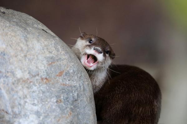 とべ動物園を応援する写真クラブのブログ-みんな会いに来てね!